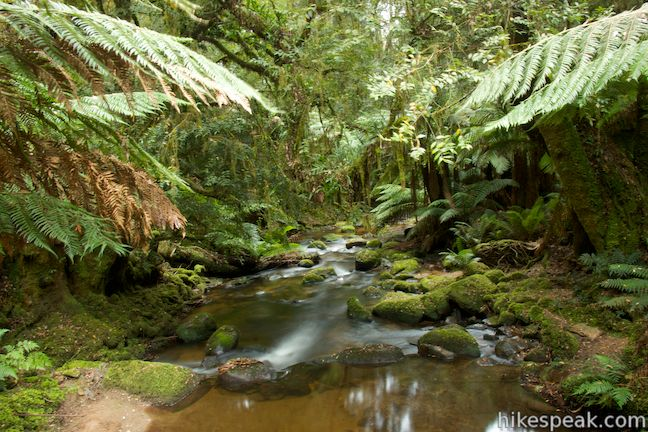 Saint Columba Falls Walking Track Stream