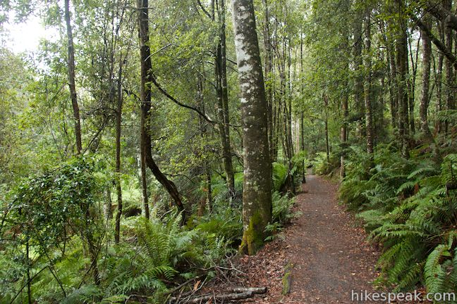 Liffey Falls Nature Walk