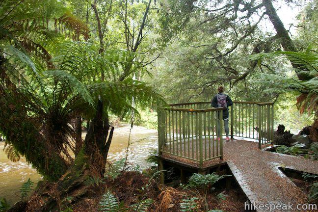 Liffey Falls State Reserve Cascade Overlook