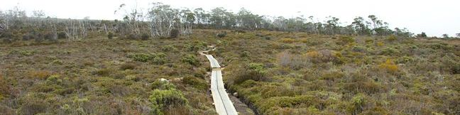 Moorland Mosaic Walking Track Mount Field National Park hike Tasmania Australia