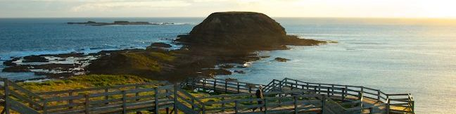 The Nobbies Boardwalk Phillip Island walk Point Grant The Nobbies Trail Seal Rocks Nobbies Blowhole Track Victoria Australia