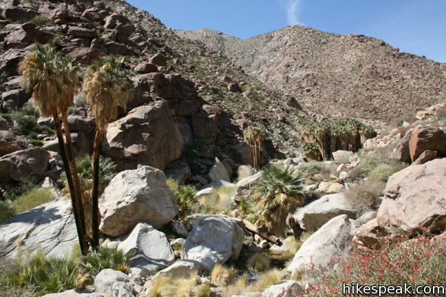 This 3.25-mile loop visits a popular palm tree oasis in a canyon west of Borrego Springs.