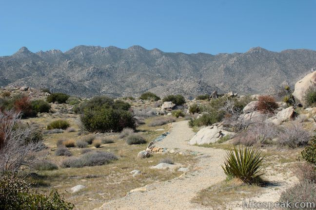 Anza-Borrego Desert Culp Valley Trail