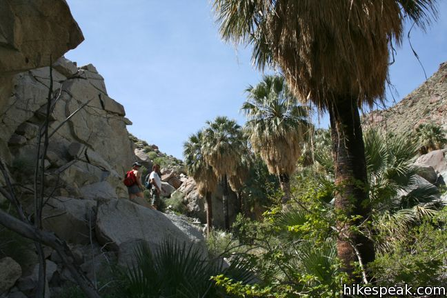 Hellhole Canyon Trail To Maindenhair Falls Anza Borrego