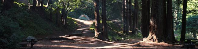 Camping Limekiln State Park Campground Big Sur California Limekiln Campground Redwood Campsites Ocean Campsites Limekiln SP