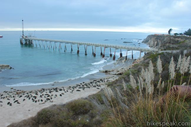 This 1 to 2-mile hike goes from Carpinteria Bluffs Nature Preserve to a viewing area above a harbor seal rookery, offering beach access and beautiful oceanfront hiking.