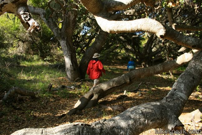 Los Osos Oaks State Natural Reserve in San Luis Obispo
