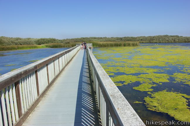 Osos Flaco Lake Boardwalk