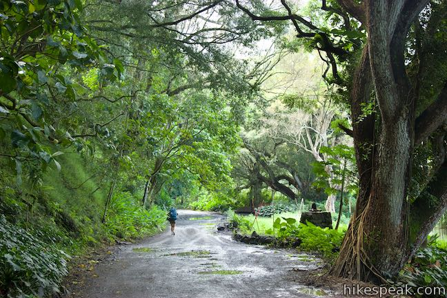Waipio Beach Hike Hawaii