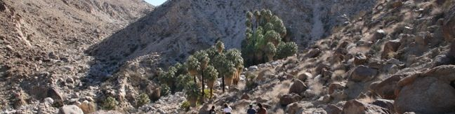 49 Palms Oasis Trail Joshua Tree National Park Fortynine Palms Oasis Hike California