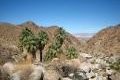 49 palms trail