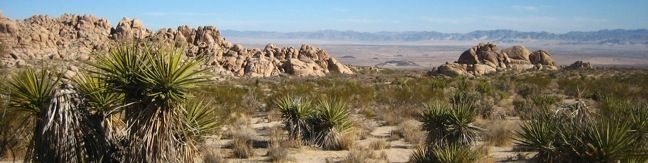 Indian Cove Joshua Tree National Park camping and hiking