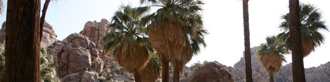 Joshua Tree Lost Palms Oasis
