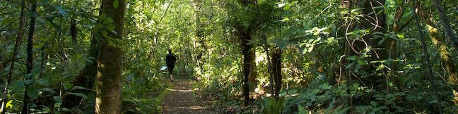 Rimu Walk Mangawhero Forest Tongariro National Park Hike Ohakune New Zealand