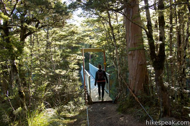 Waitonga Falls Track Swinging Bridge