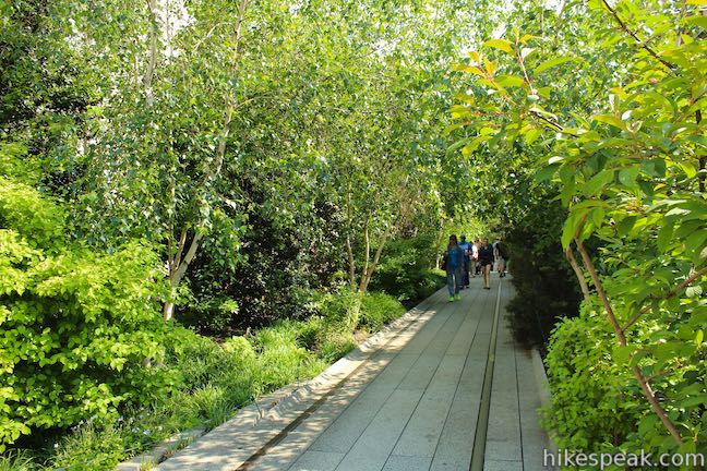 Chelsea Thicket High Line Trail