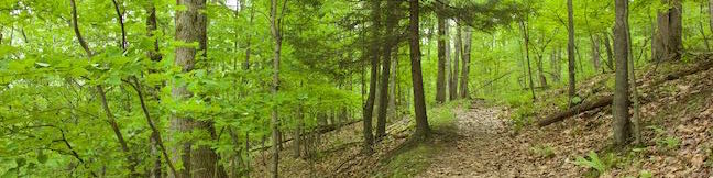 Binghamton University Nature Preserve hike Forest Loop Trail Vestal New York hiking trail