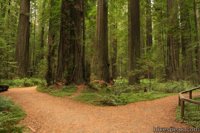 Founders Grove Nature Trail in Humboldt Redwoods State Park