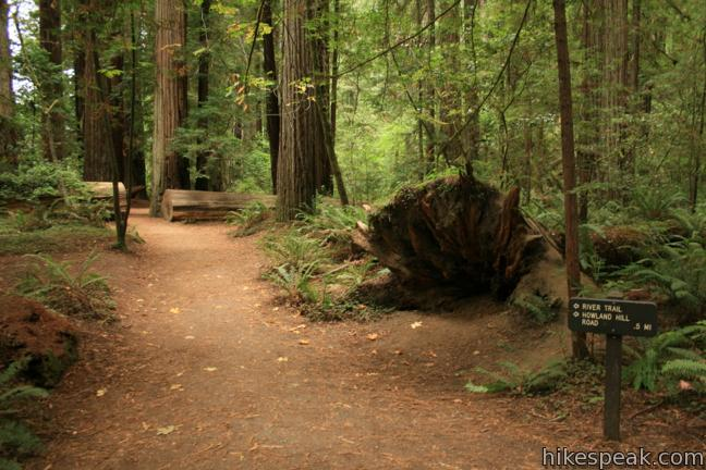 This 0.55-mile hike explores an old growth grove of coastal redwoods in Jedediah Smith Redwoods State Park.