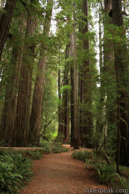 Stout Memorial Grove Trail Jedediah Smith Redwoods State Park