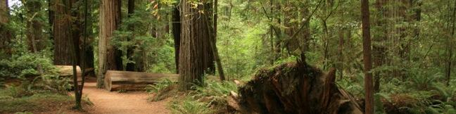 Stout Memorial Trail Redwood Grove California Jedediah Smith Redwoods State Park