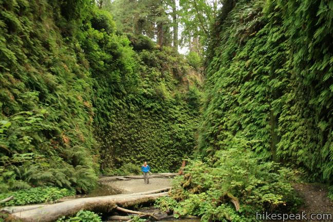 This one-mile hike explores an incredibly ferny canyon in Prairie Creek Redwoods State Park.