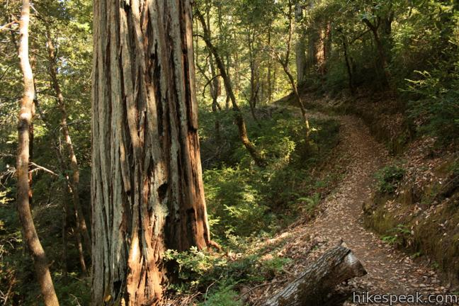 Durphy Creek, Tan Oak Springs, and Lookout Point Trails Loop in Richardson Grove Redwoods State Park