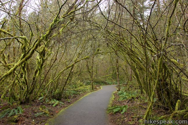 Vine Maple Trail Tualatin Hills Nature Park