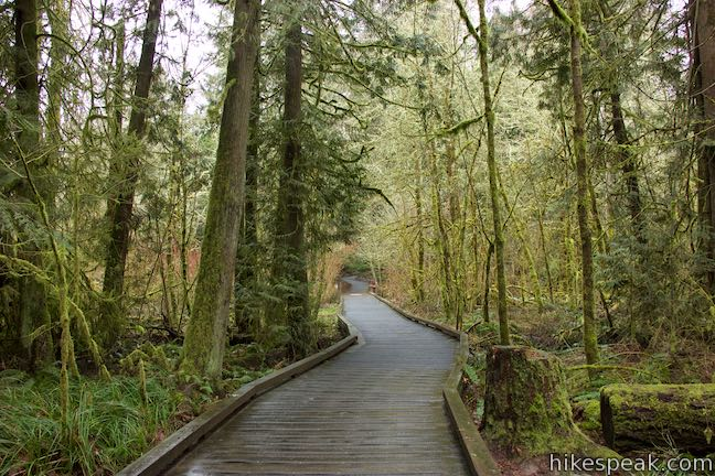 Vine Maple Trail Boardwalk Tualatin Hills Nature Park