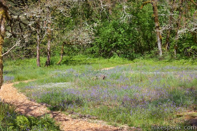 Camassia Natural Area Wildflower Meadow