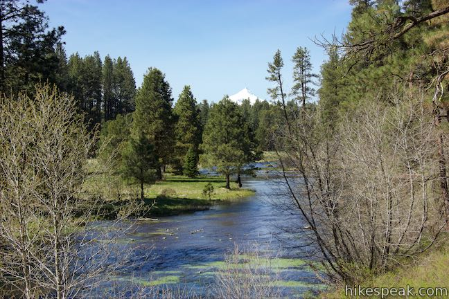 Metolius River View