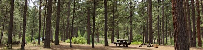 Lower Canyon Creek Campground Deschutes National Forest Metolius River Camp Sherman Oregon