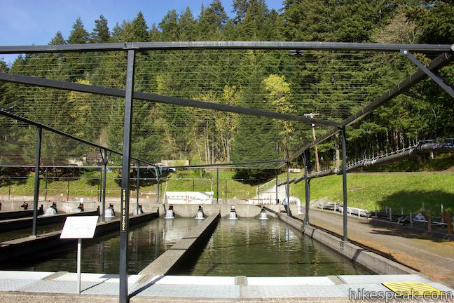 Cascade Fish Hatchery