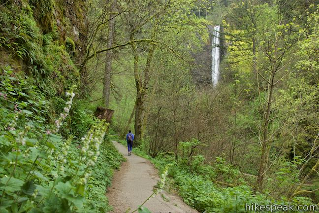 Get up close to a duo of waterfalls on this loop hike on the Portland side of Columbia River Gorge.