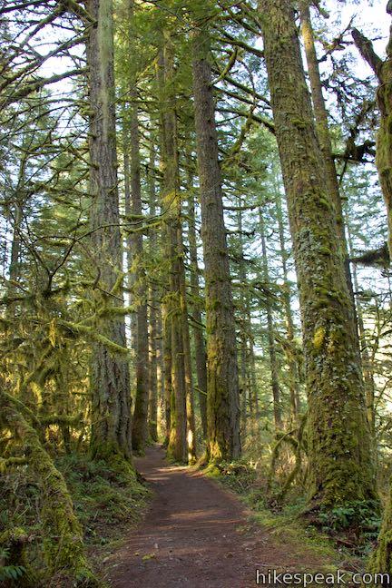 Maple Ridge Trail Silver Falls State Park