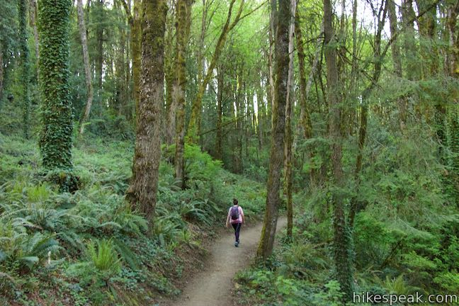 Marquam Nature Park Loop Trail