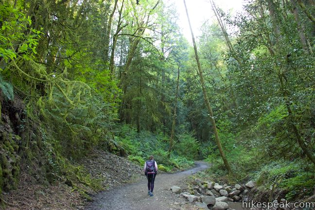 Marquam Nature Park Shelter Loop Trail