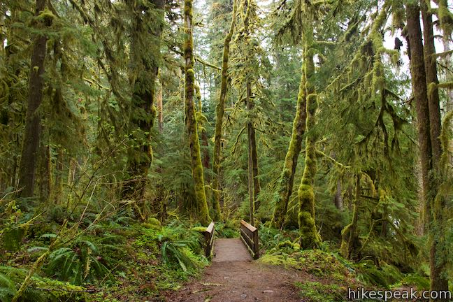 Old Salmon River Trail Mount Hood National Forest