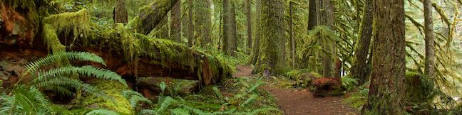 Old Salmon River Trail Welches Oregon Mount Hood National Forest Hike