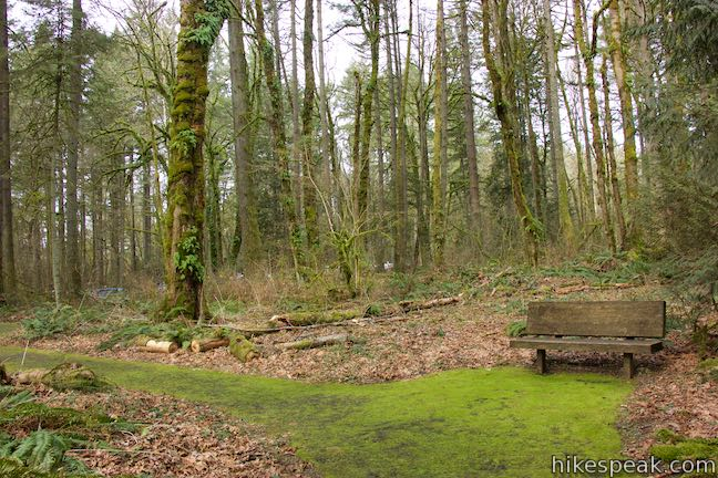 Trillium Trail Bench Tryon Creek