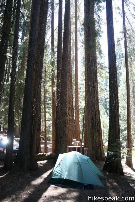 Sequoia National Park Camping With Dogs