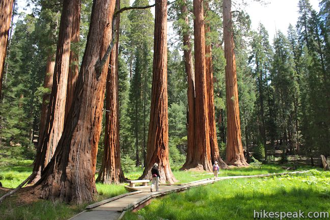 This easy, educational, and beautiful 1.6-mile loop explores the giant sequoias around Round Meadow in the Giant Forest of Sequoia National Park.