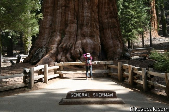 This paved 1-mile hike visits the world's biggest tree, a landmark within the Giant Forest in Sequoia National Park.