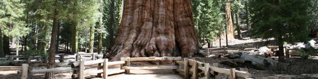General Sherman Tree Sequoia National Park hiking trail