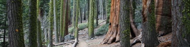Crescent Meadow Hike Sequoia Tharps Log Chimney Tree Sequoia Hike