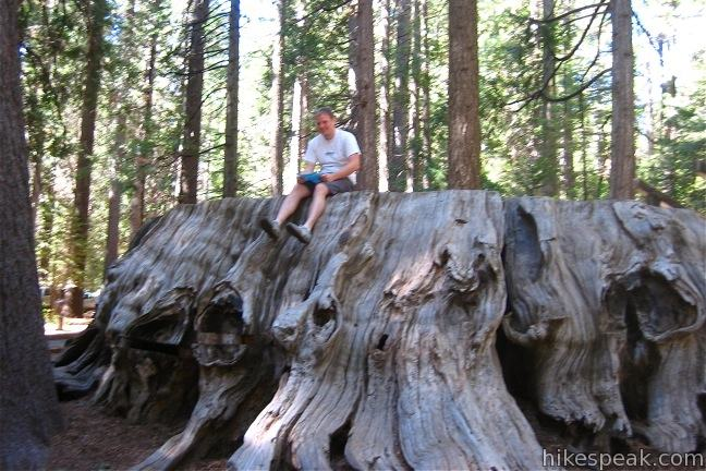 Discovery Stump North Grove Calaveras Big Trees State Park