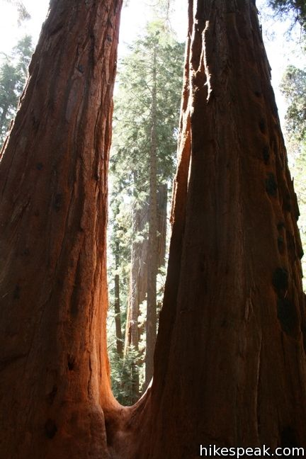 Trail Of 100 Giants Giant Sequoia National Monument