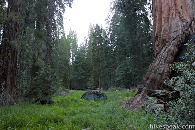 Grant Grove Meadow Kings Canyon