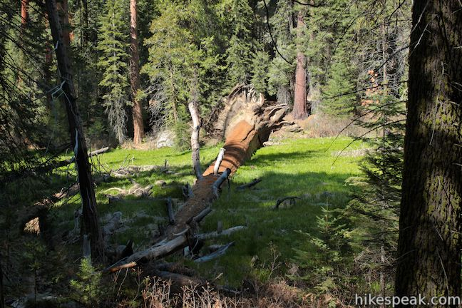 Lion Meadow fallen sequoia Kings Canyon National Park