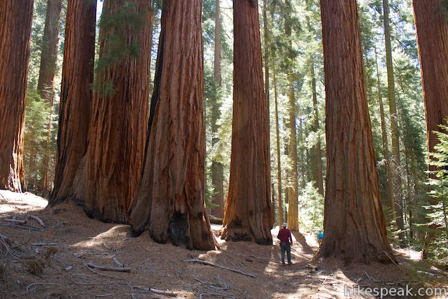 This 8.3-mile loop on Hart Tree Trail and Redwood Creek Trail passes tranquil streams and interesting sequoias in the Redwood Mountain Grove in Kings Canyon National Park.